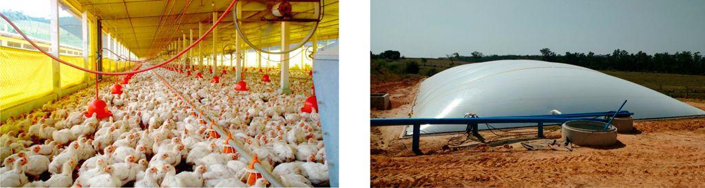 produção de biogás com cama de frango